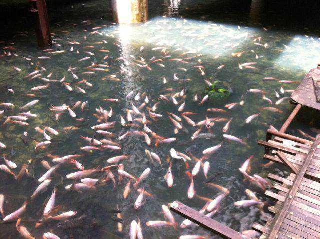 New-World-Trade-Center-in-Bangkok-12