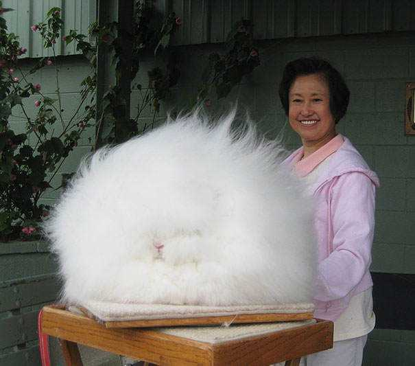 cute-fluffy-animals-213