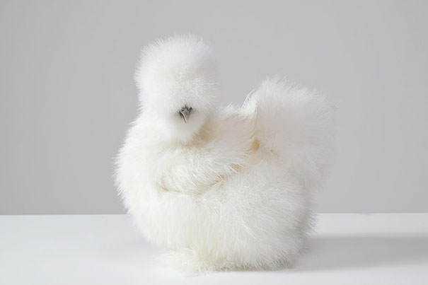 cute-fluffy-animals-223