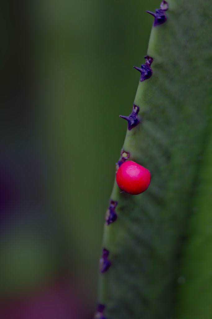 frutinha vermelha_low