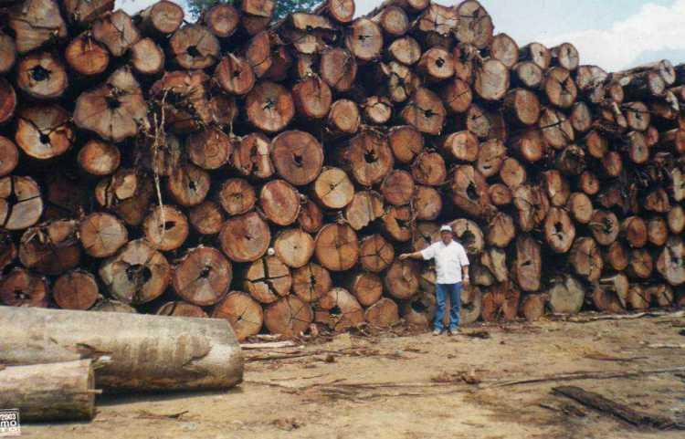 As apreensões de madeira ilegal representa um percentual ínfimo, inócuo diante da devastação permanente das multinacionais da exploração.