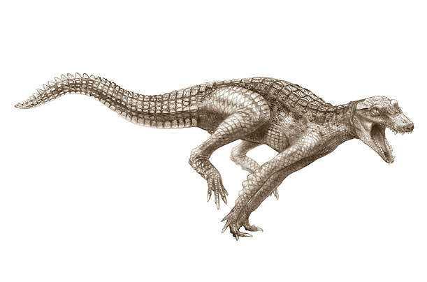 crocs_07