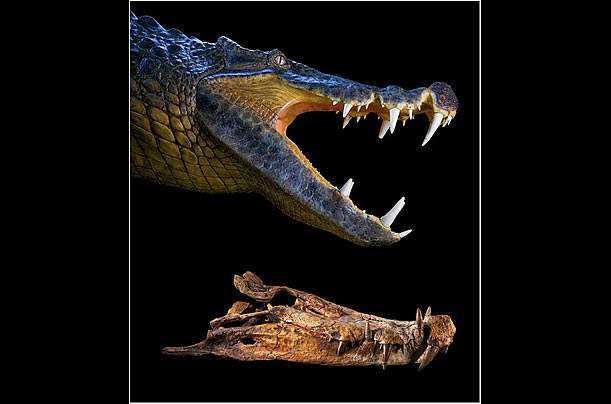 crocs_08b