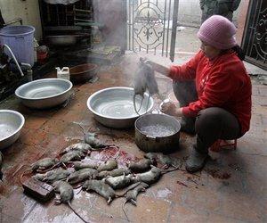 O padrão das cozinhas do Vietnã não é bem o que chamamos de limpa.