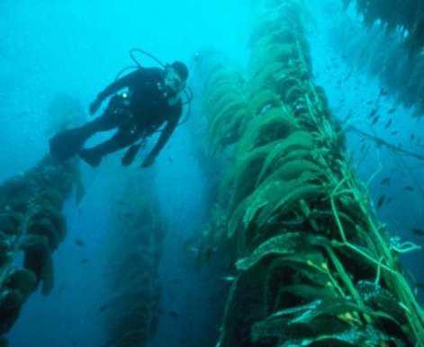 kelp5-jpg