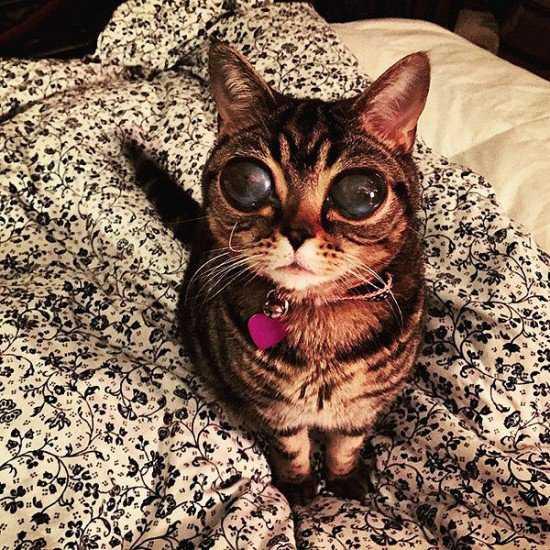 Matilda-alien-eyes-550x550