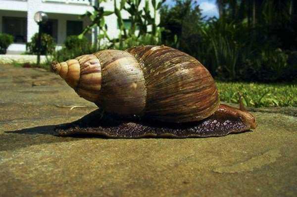 giant_snails_02-600x399