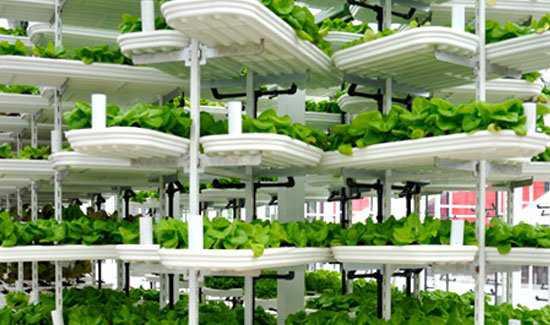 North-America-First-Vertical-Urban-Farm