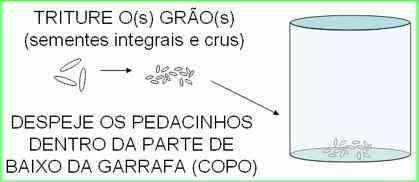 Armadilha-para-mosquito-da-dengue-com-garrafa-Pet-6