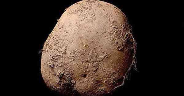 Kevin-Abosch-potato-600x315
