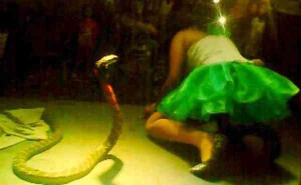 Irma-Bule-snake-600x370