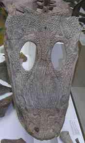 i-e048dfdcc90659dfe5b241aecbceb6c4-mastodonsaur-resized-july-2008
