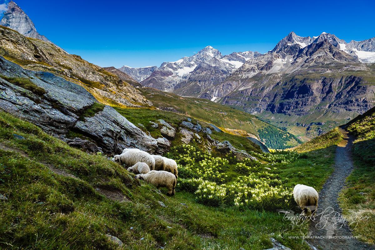 نتيجة بحث الصور عن zermatt switzerland