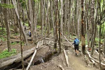 Torres del Paine trail through trees