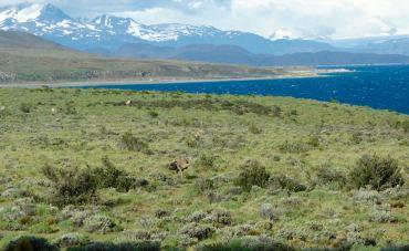 Torres del Paine National Park wild rhea