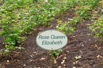 Les Pres d'Eugenie roses