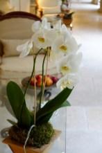 Les Pres d'Eugenie orchids