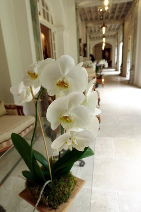 Les Pres d'Eugenie orchids detail