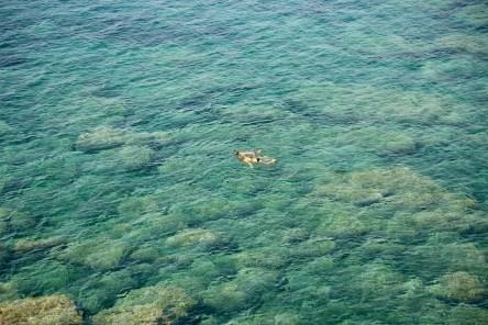 Marine de Scalo swimmers