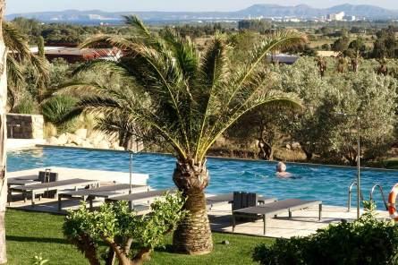 Mas Lazuli palm tree
