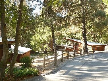 Pilgrim Pines Camp