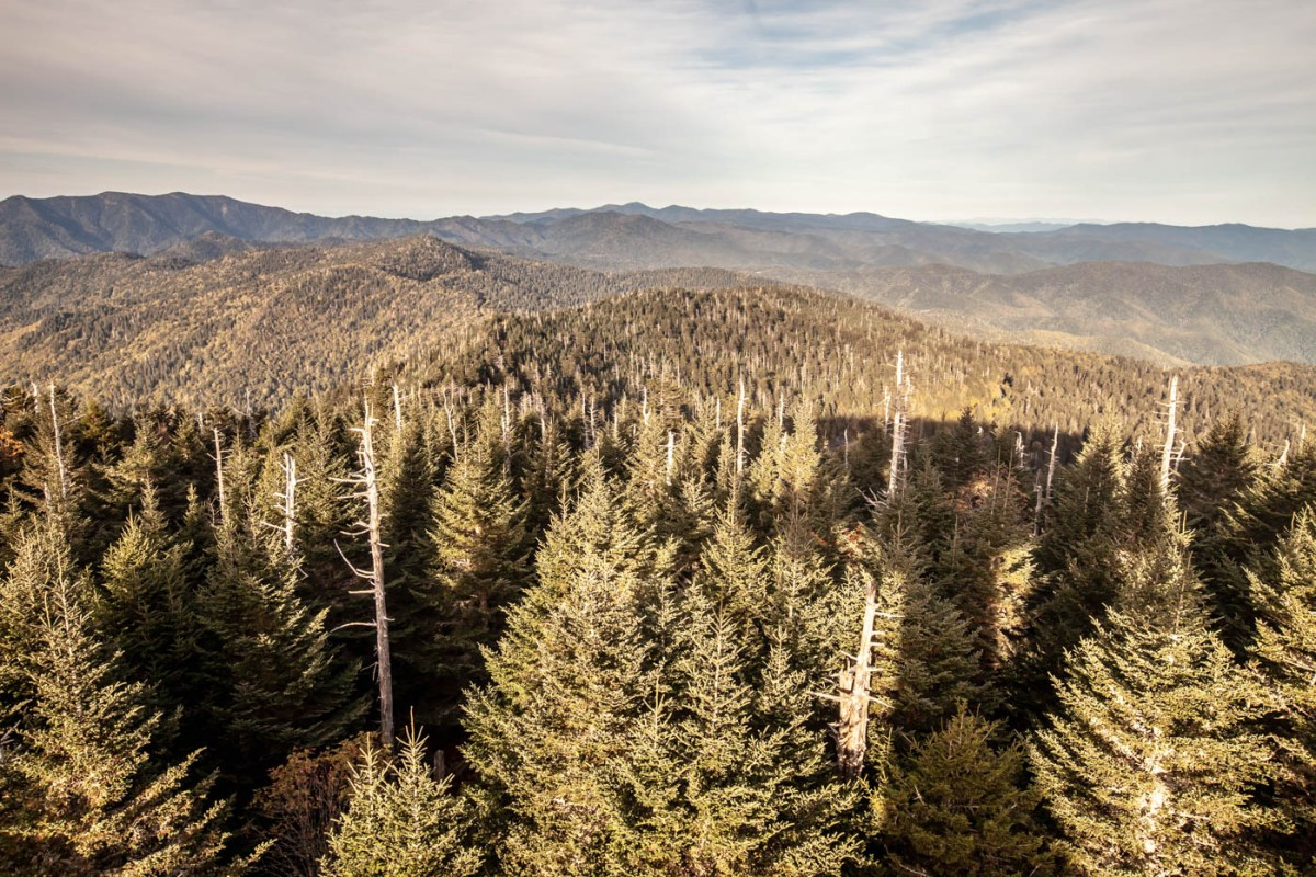 Clingmans Dome Sunset at Great Smoky Mountains National Park off of Newfound Gap Road #vezzaniphotography