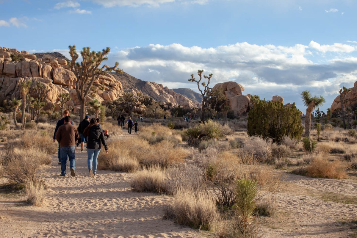 How the Federal Government Shutdown Affected Joshua Tree National Park #vezzaniphotography