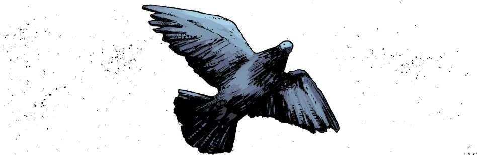 Six Days Pigeon