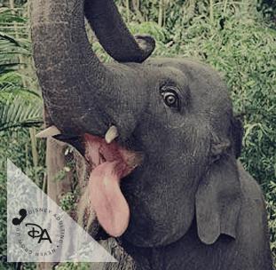 Disney-Elephants-40