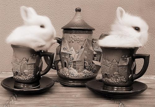 可愛度100%!咖啡杯中的小動物特輯   動物,寵物營養補充食品唷!  真是毛小孩的用品大蒐集很推薦的唷,萌   生活發現   妞新聞 niusnews