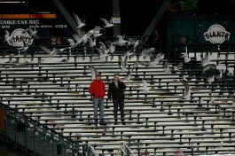 Fans look on in the 15th inning as seagulls take over the outfield bleachers as the Cincinnati Reds face the San Francisco Giants at AT&T Park in San Francisco, Calif., on Friday, May 12, 2017.