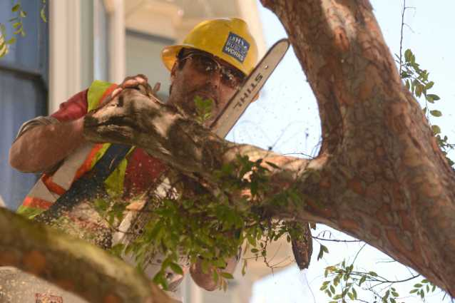 A San Francisco Public Works crew member uses a chain saw to cut tree branches at a tree maintenance program launch in Noe Valley in San Francisco, Calif. on Wednesday, July 19, 2017.