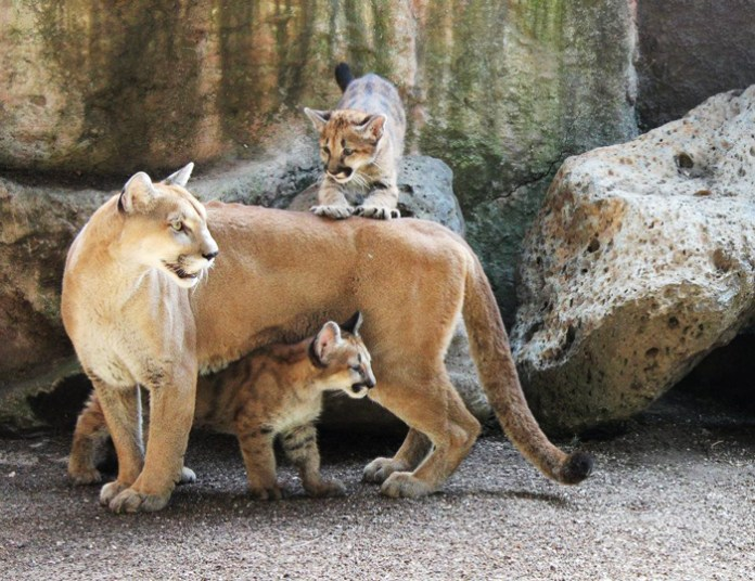 11-have fun-in-the-park-zoo-benito-juarez