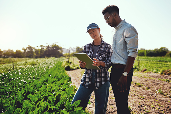 Two young farmers looking at tablet in farm field