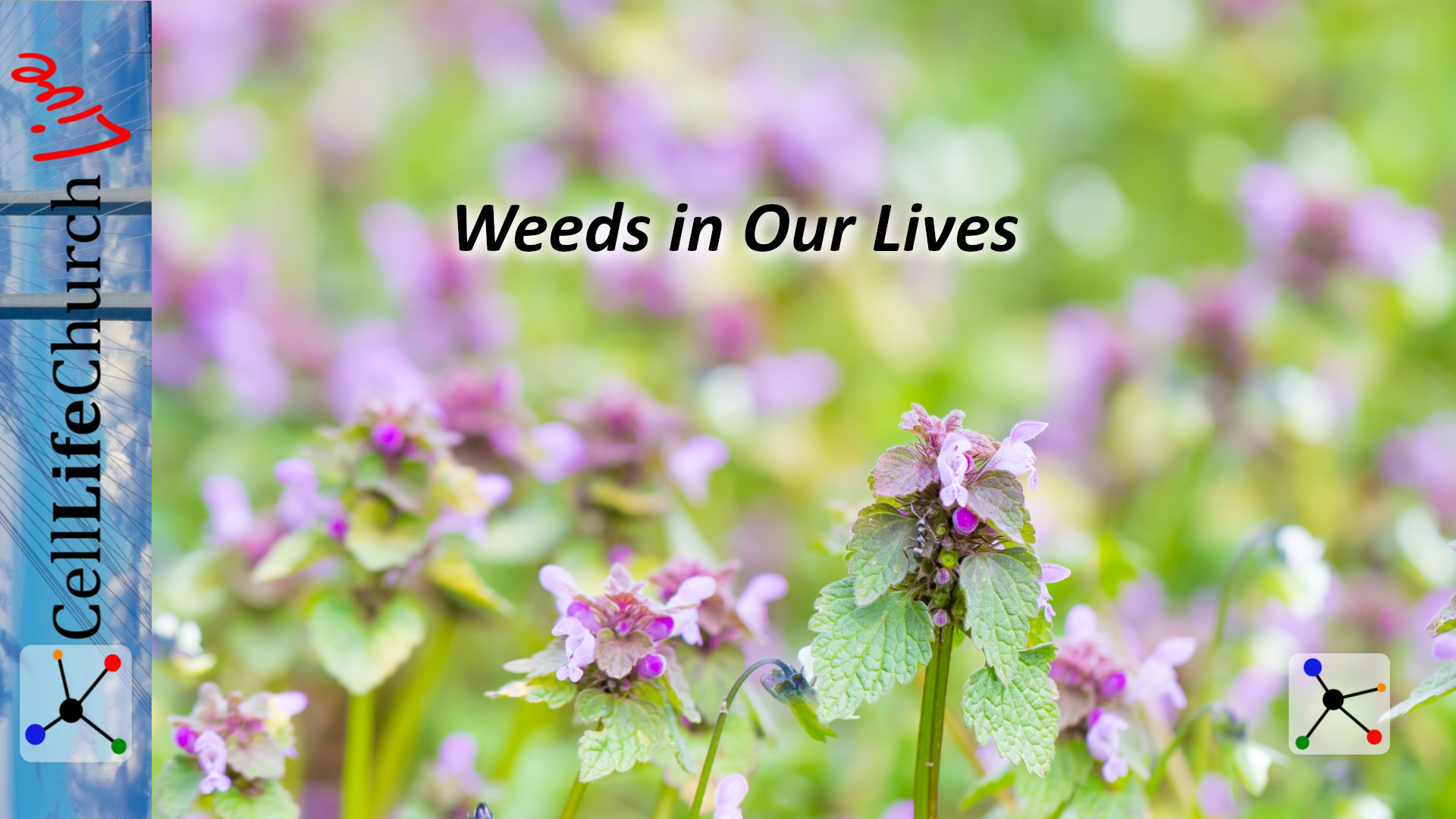 Weeds in Our Lives