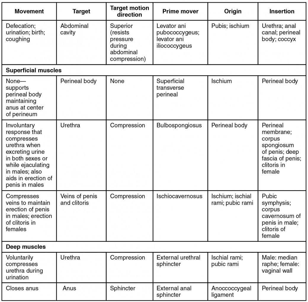 Scapula Worksheet