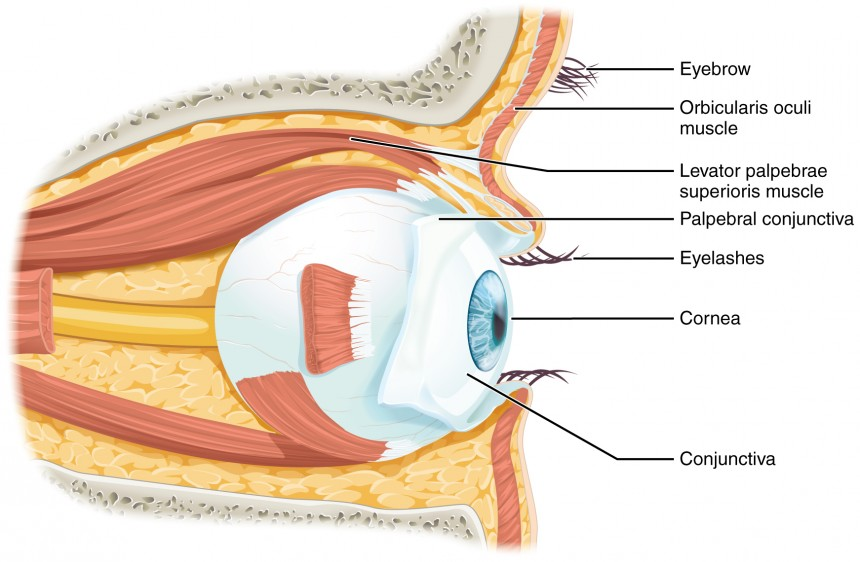Sensory Structures Bioninja