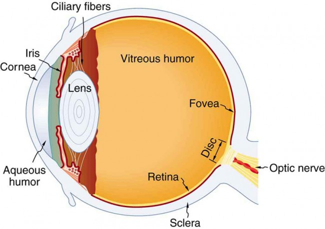 About Fungal Eye Infections Types Of Diseases Fungal Diseases