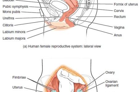 interior uterus anatomy » Full HD MAPS Locations - Another World ...