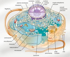 Preface | Microbiology