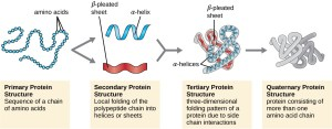 Proteins | Microbiology