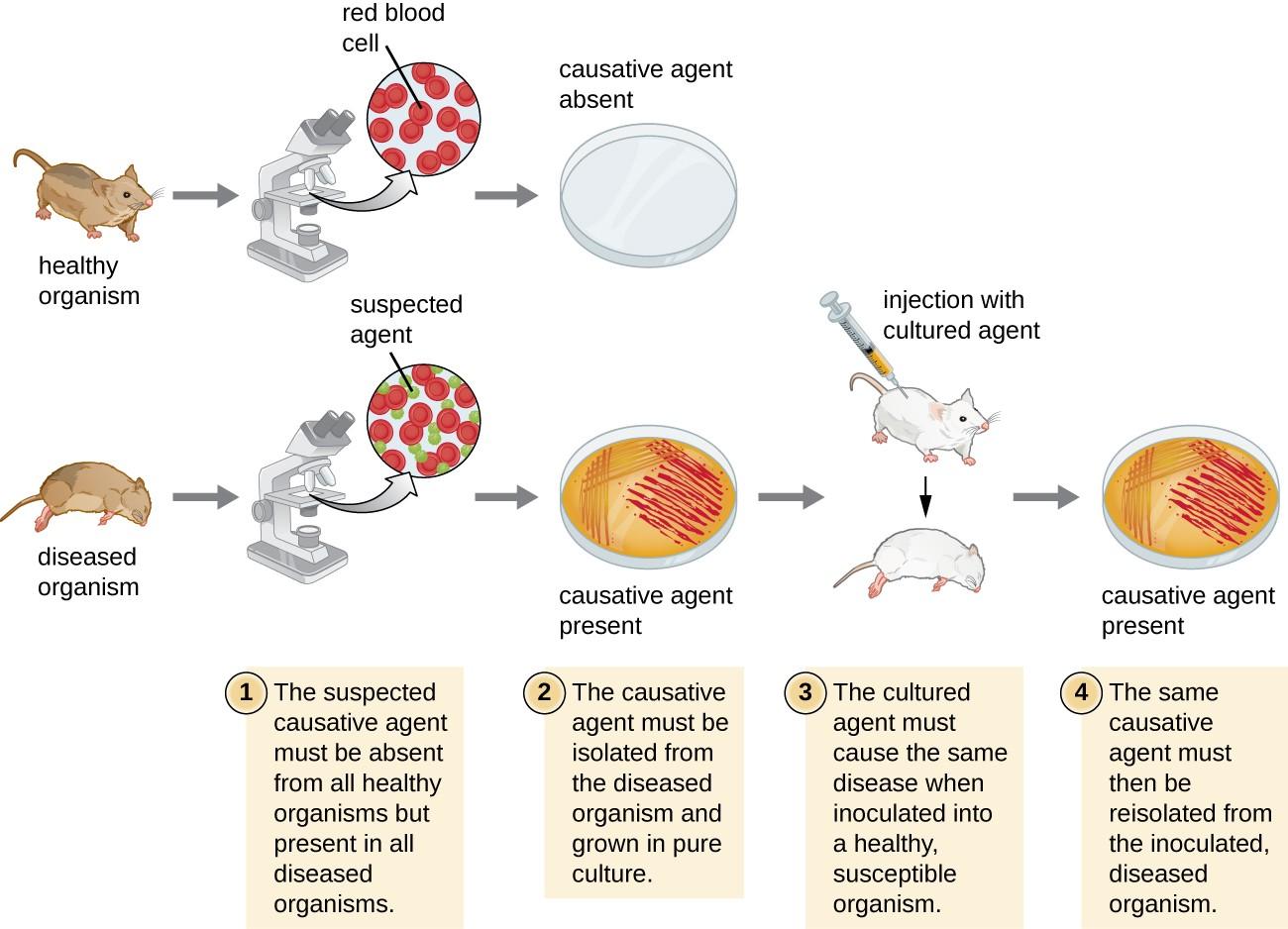 How Pathogens Cause Disease