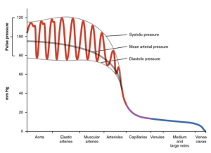 Blood Flow, Blood Pressure, and Resistance | Anatomy and