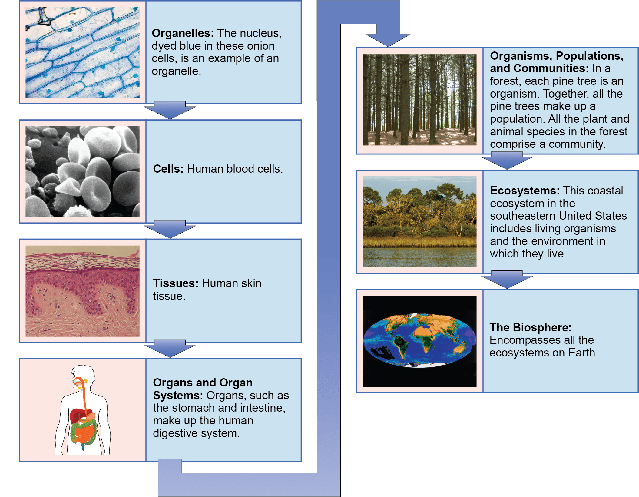 Themes And Concepts Of Biology