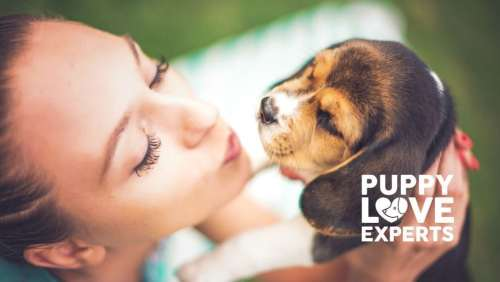 puppy love experts