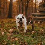 Exercise Ideas for Dogs this Fall