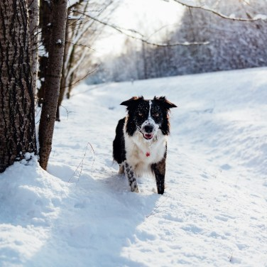 CREATIVE WINTER ACTIVITIES FOR YOUR DOG