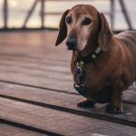 Four Foods to Avoid When Your Dog is Trying to Lose Weight