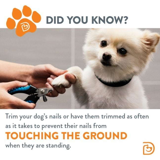 How to trim your dogs nails dogtopia dog nail trim solutioingenieria Image collections