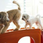 Healthy Swaps: Nutritious Treats For Your Dog